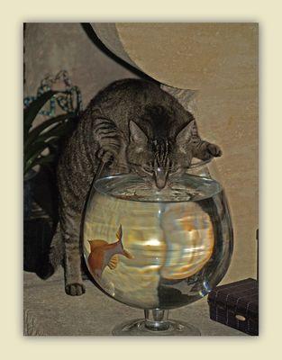 Tartiflette et le poisson rouge… -- Tartiflette und der Goldfisch…