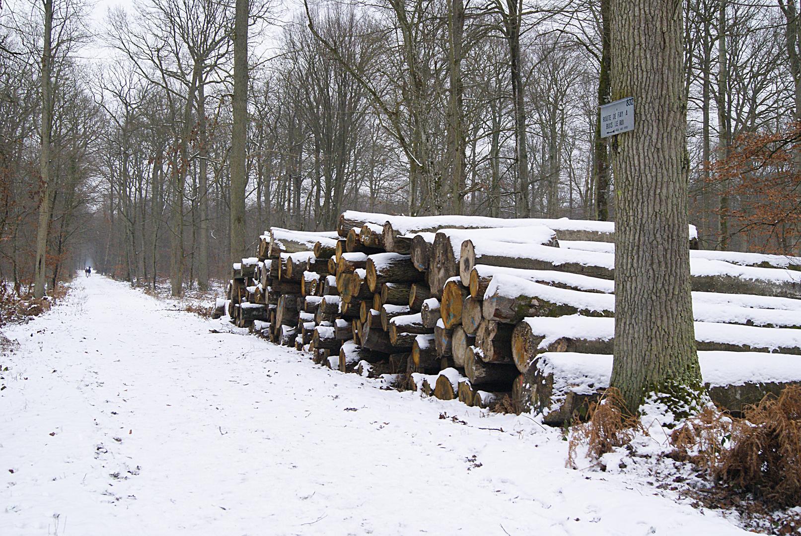 tas de bois en forêt de fontainebleau