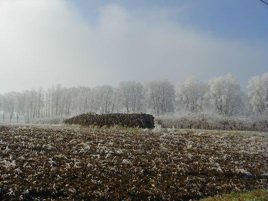 tas de bois en hiver
