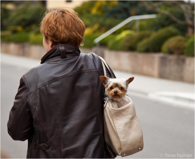Taschenhund.....