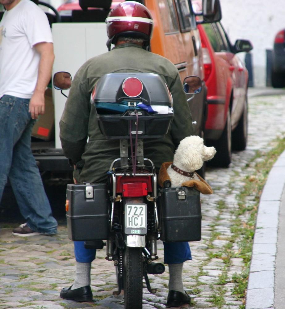Taschenhund, Hundtäschchen :-)))