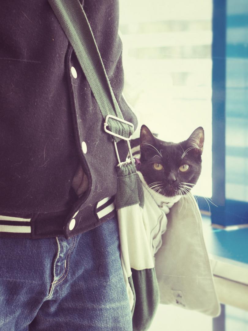 Taschenkatze