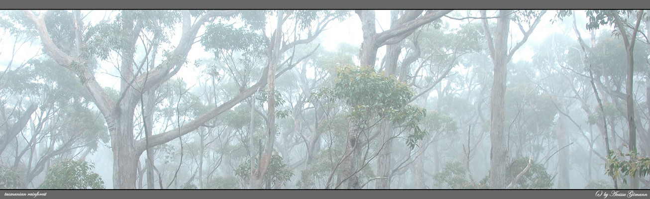 tasmanian rainforests