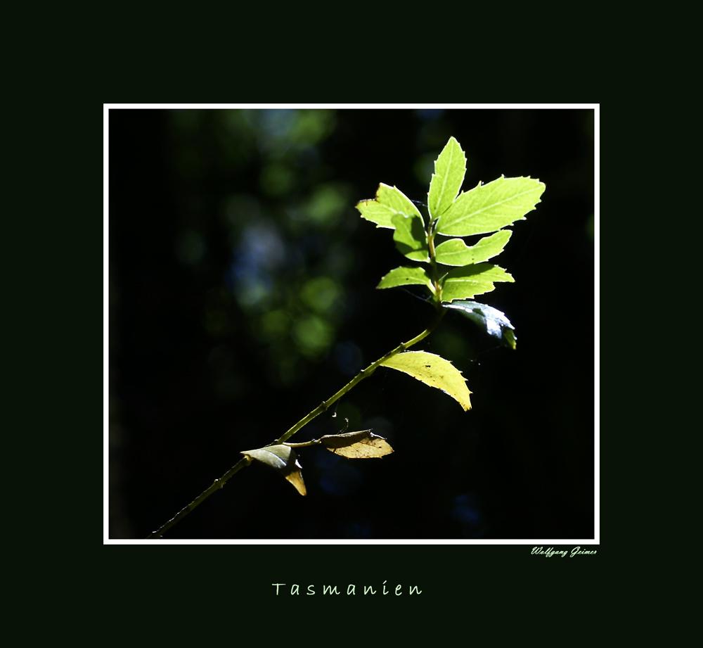 Tasmanien Colors7