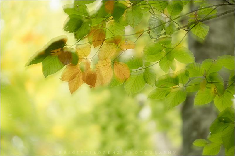 taste of autumn.....