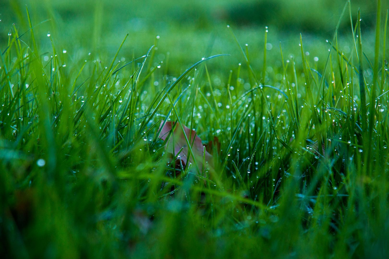Tau auf frischem Grün