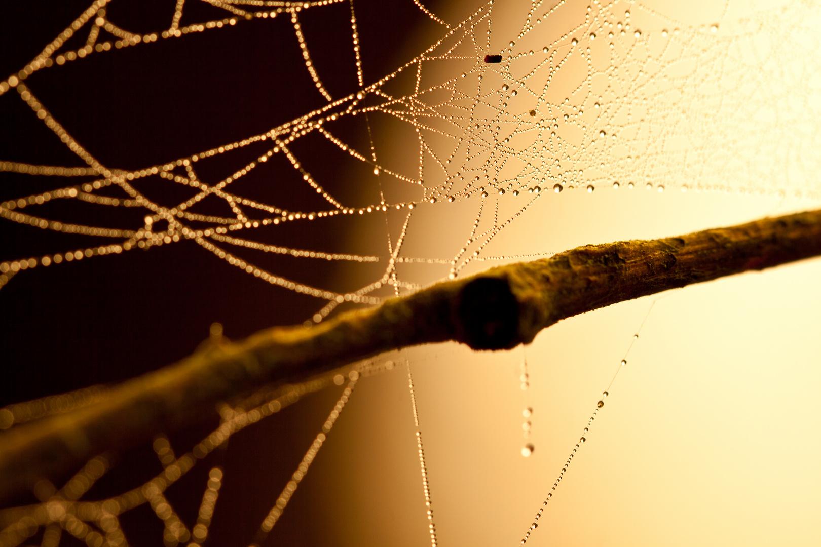Tau auf Spinnennetz im Sonnenaufgang