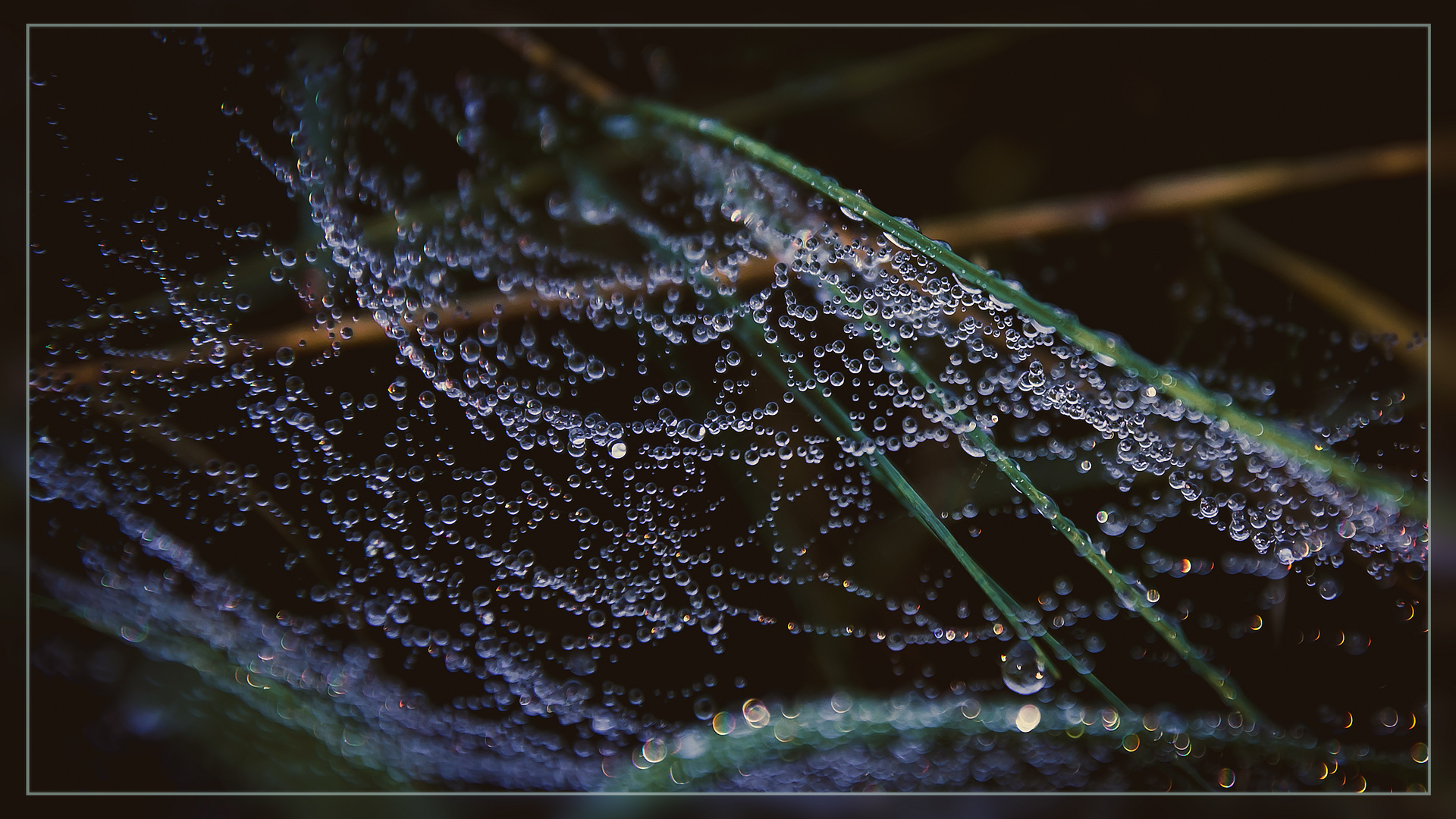 tau im spinnennetz