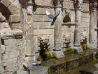Taube in Rethymnon