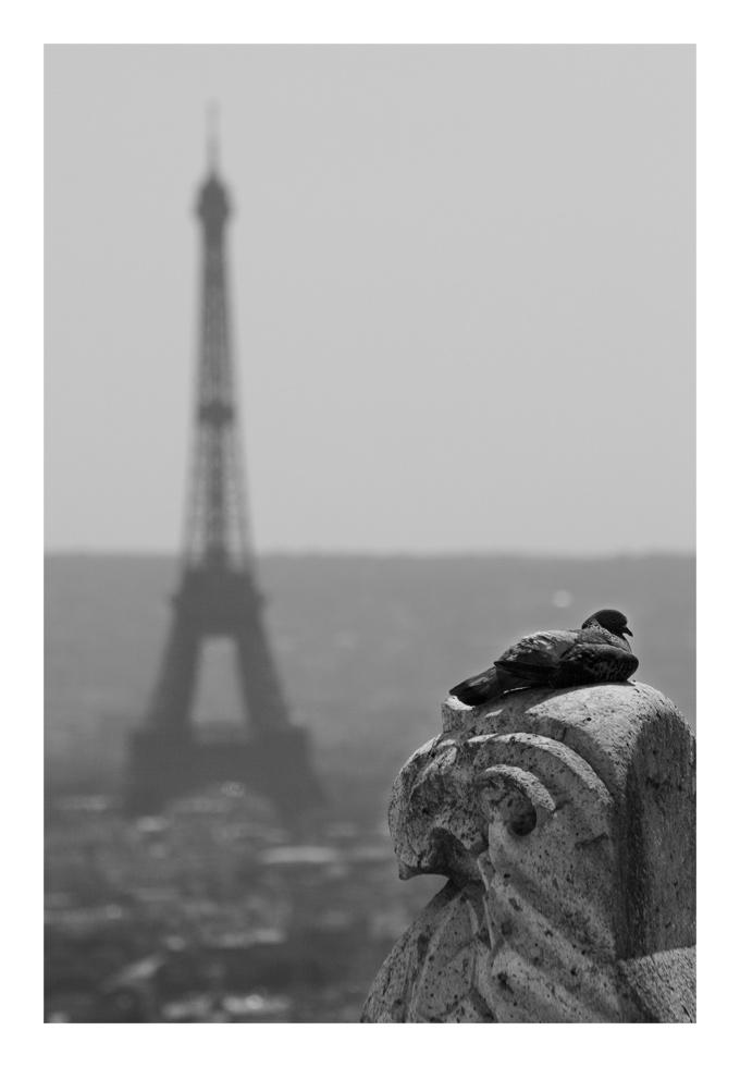 Taube - Paris