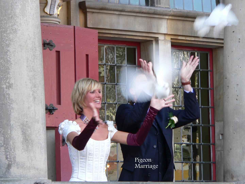 Tauben als Botschafters der Hochzeit