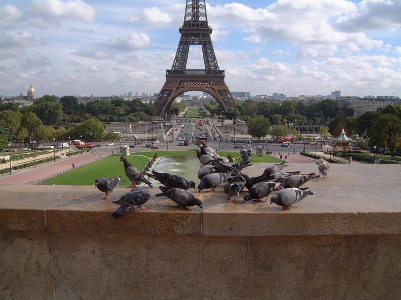 Tauben am Eifelturm