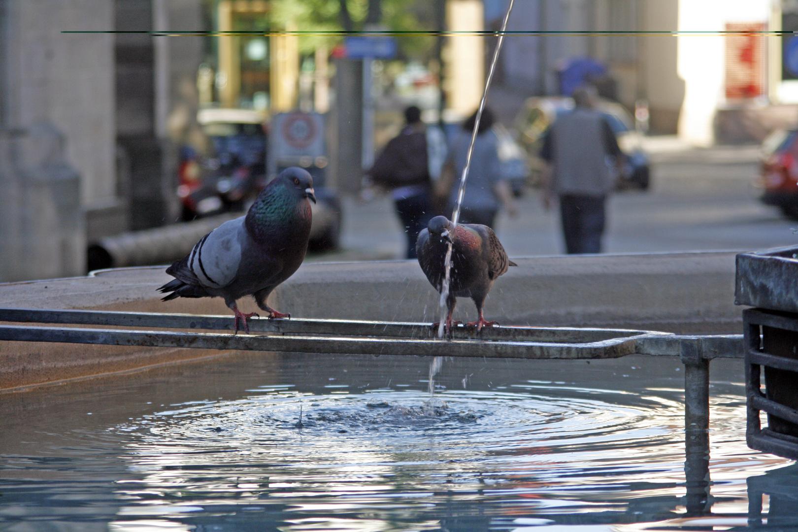 Tauben auf Brunnen in Reutlingen