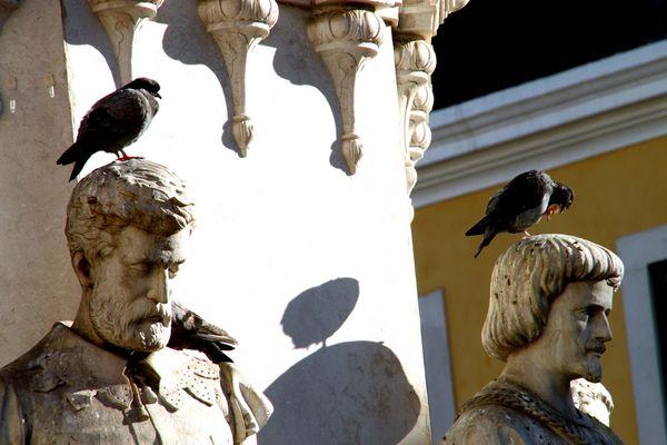 Tauben auf dem Kopf