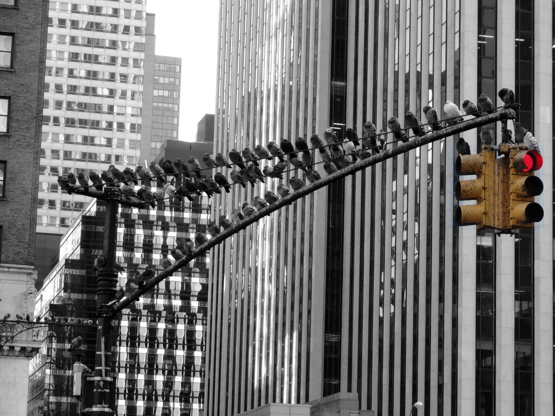 Tauben auf der Stange