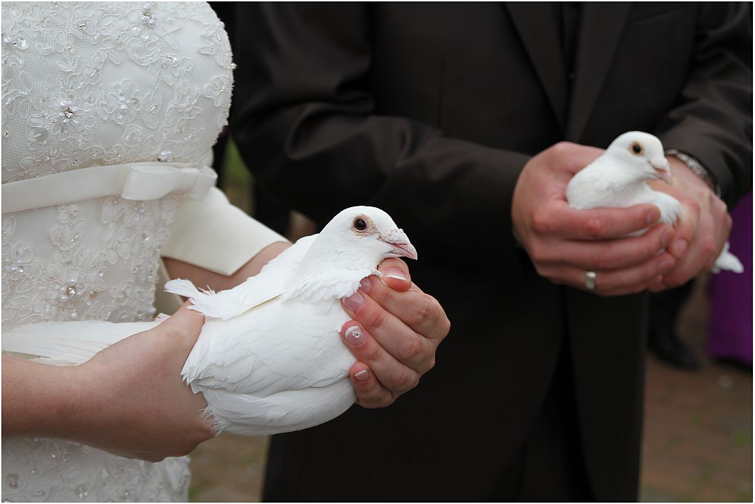 Tauben für's Glück 2