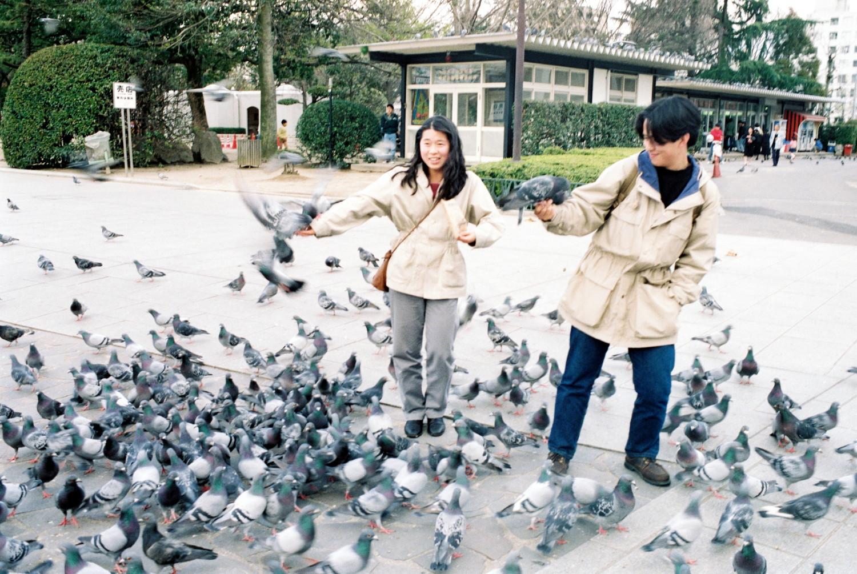 Tauben füttern im Hiroshima Peace Memorial Park (2)