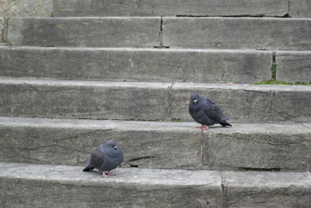 Tauben im Glück :)