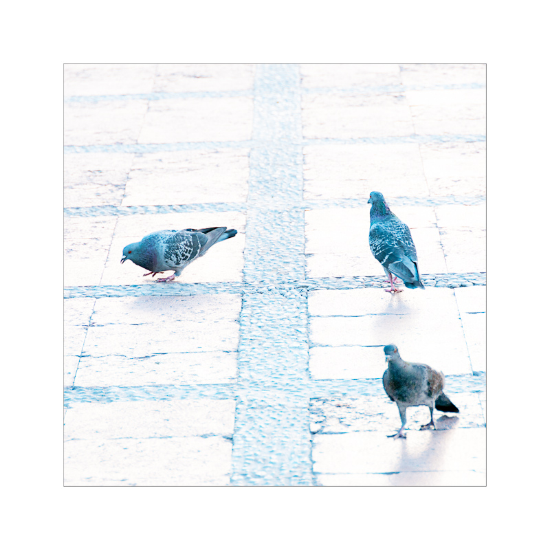 Tauben in Andalusien