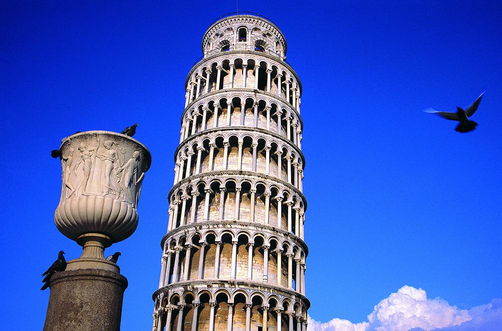 Tauben in Pisa