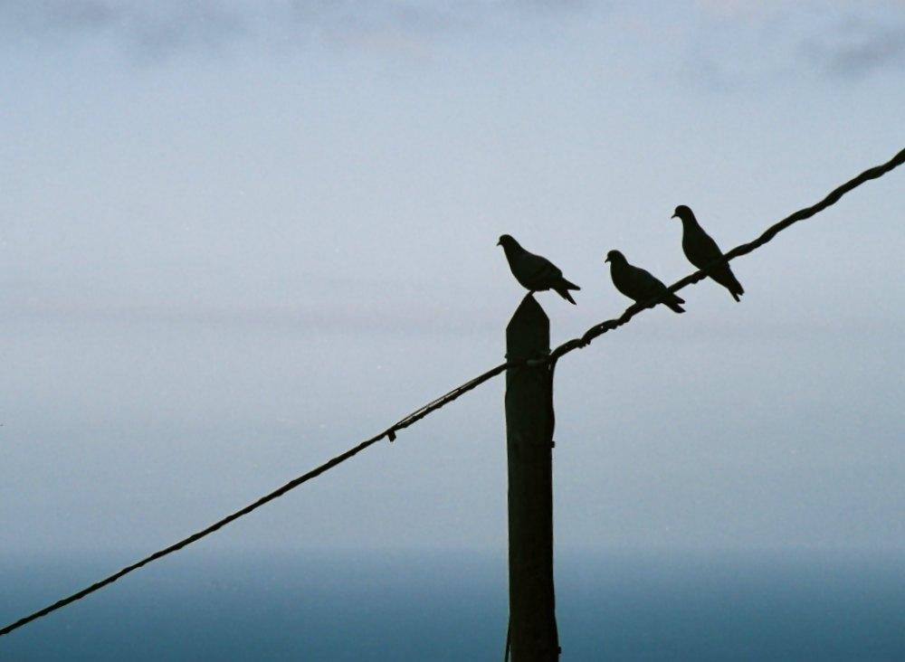 Tauben (La Palma, Kanarische Inseln)