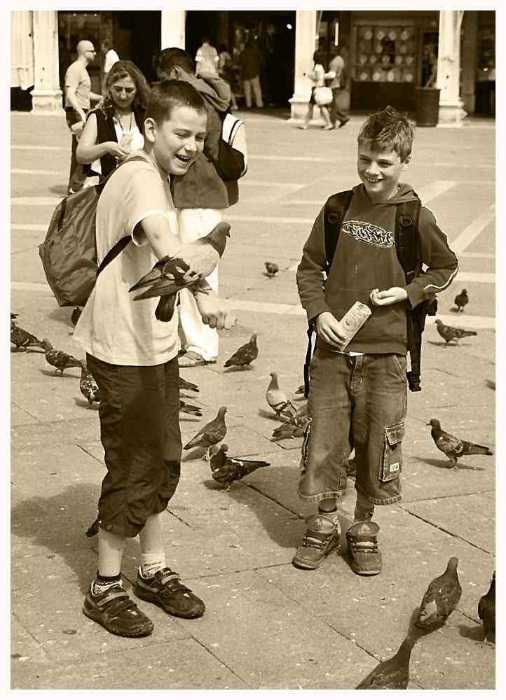 Tauben-Lachen