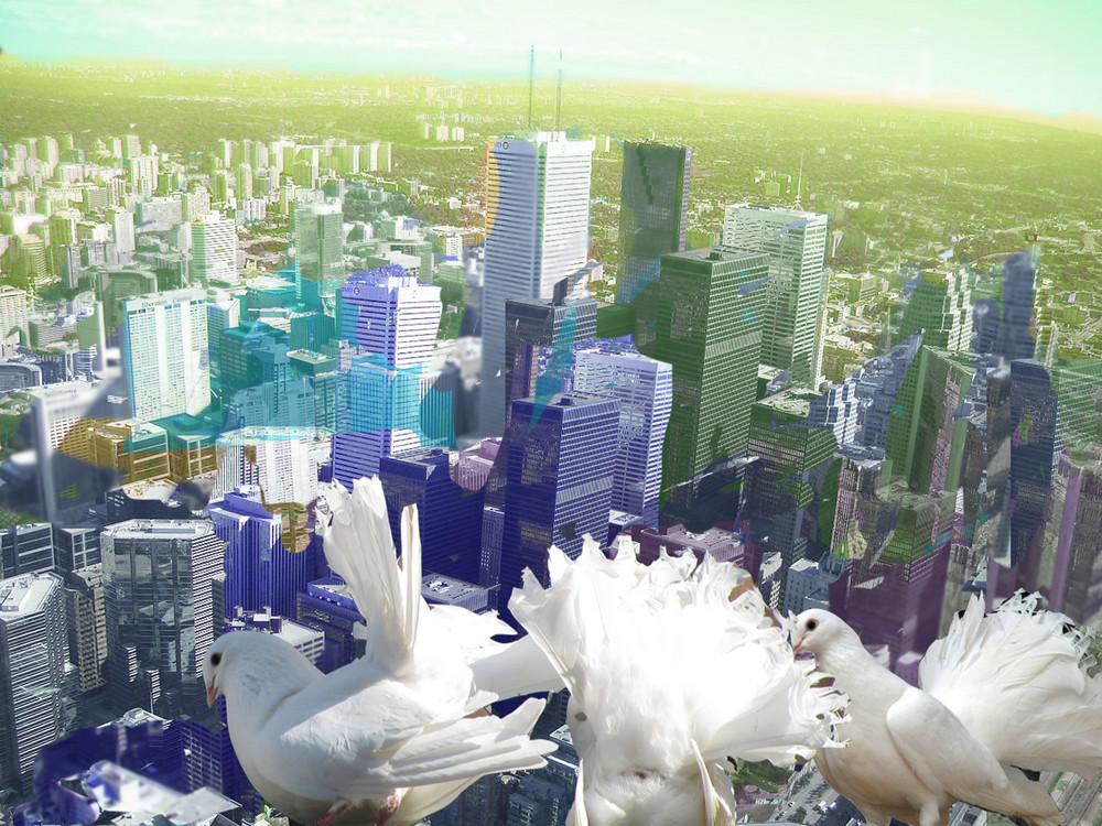 Tauben über den Dächern einer Großstadt denken über ihren Einsatz als Friedenstaube nach