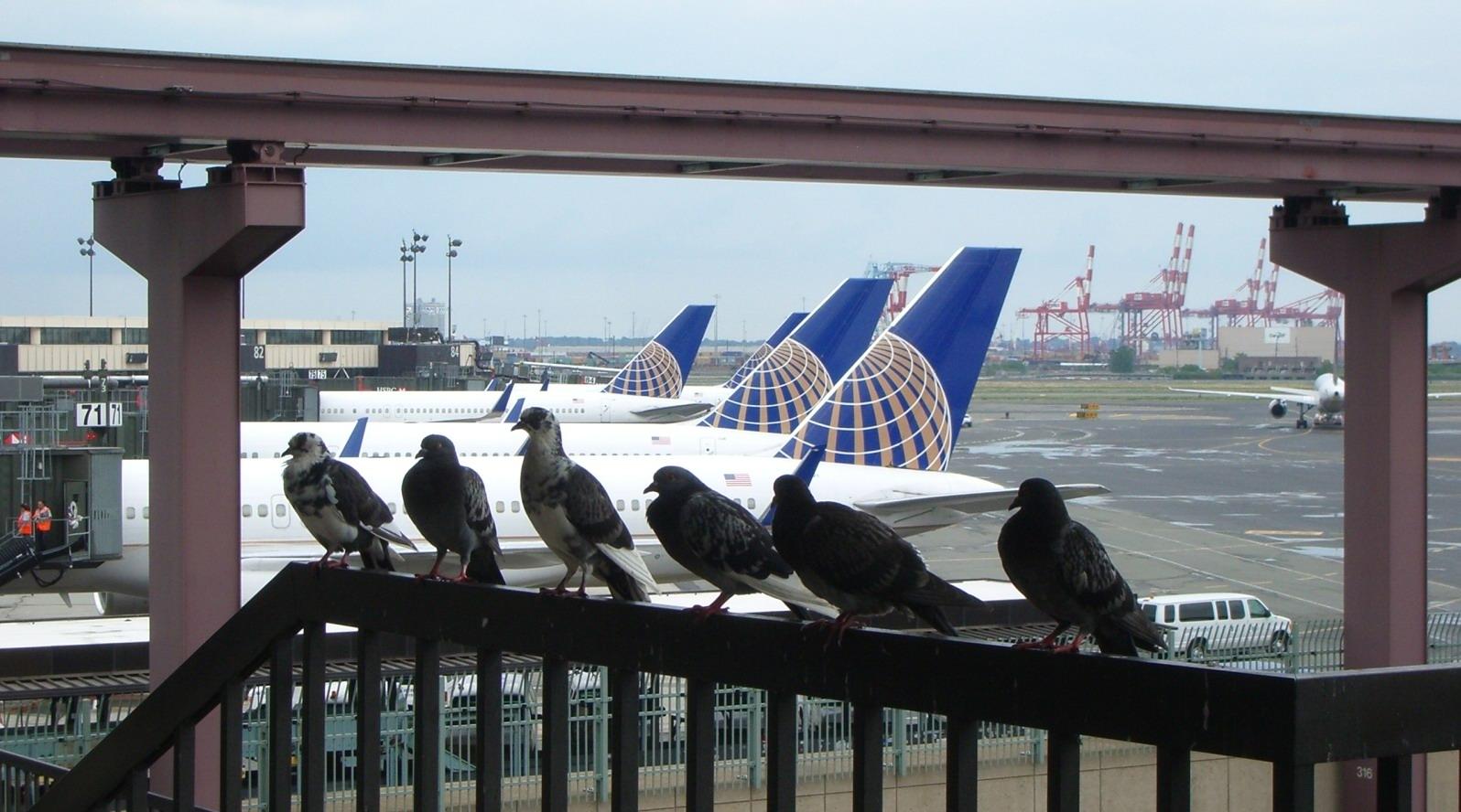 Tauben und Flugzeuge
