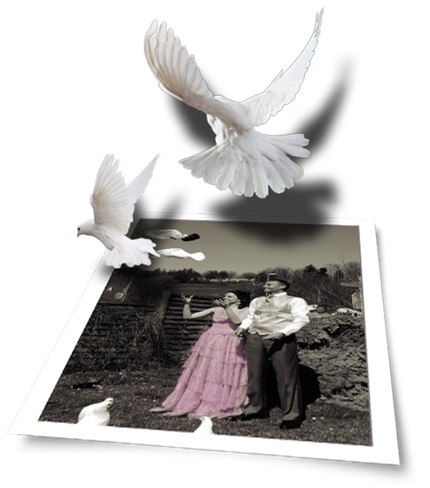 Tauben und Träume werden Wirklichkeit