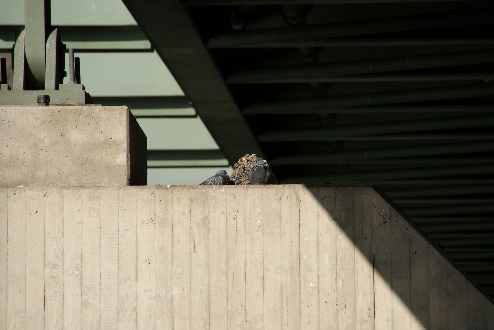 Tauben unter einer Brücke