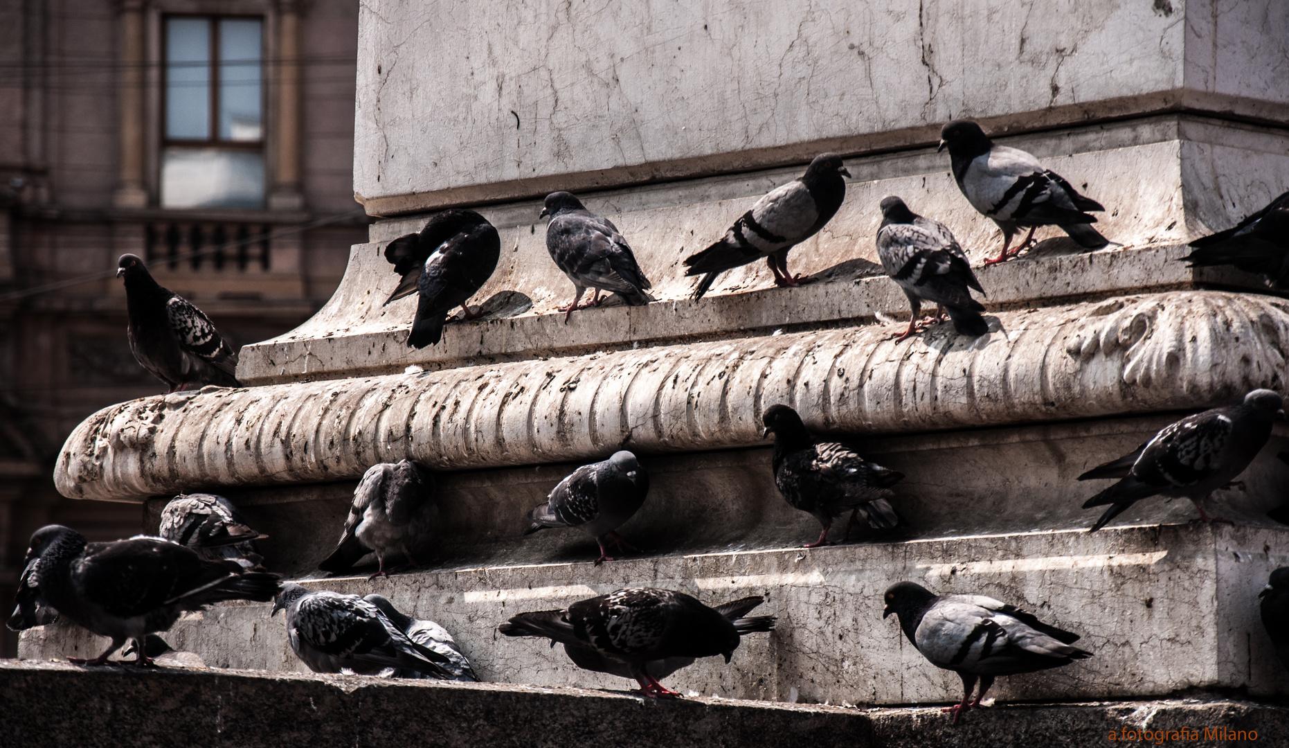 Tauben von Mailand.....