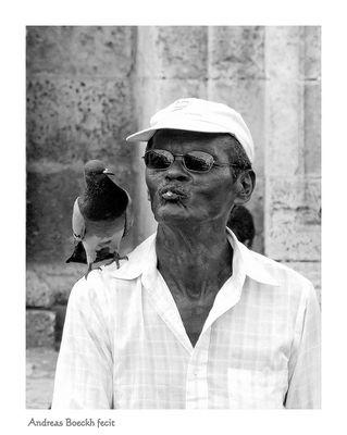 Taubenfreund - amigo de las palomas