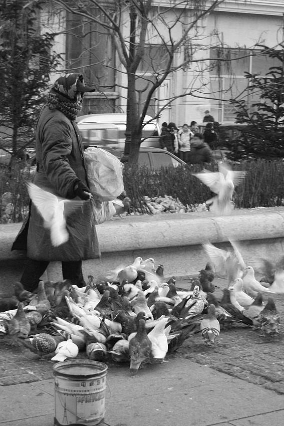 Taubenfütterung bei -23 Grad