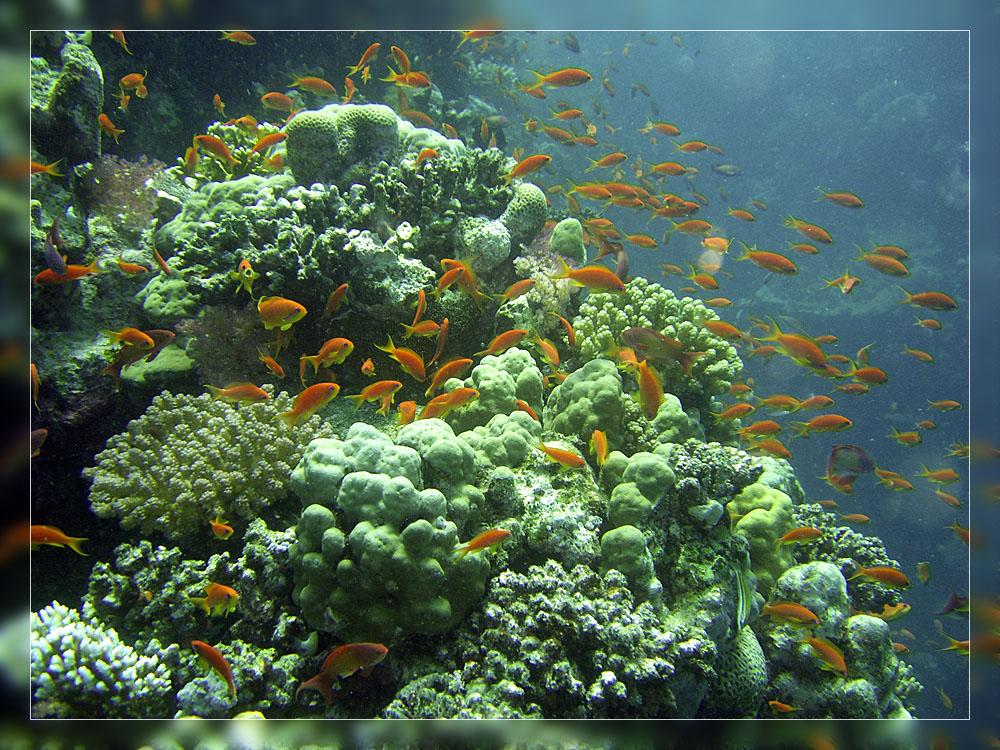 Tauchen im Aquarium