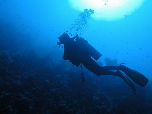 Taucher am Shark Reef