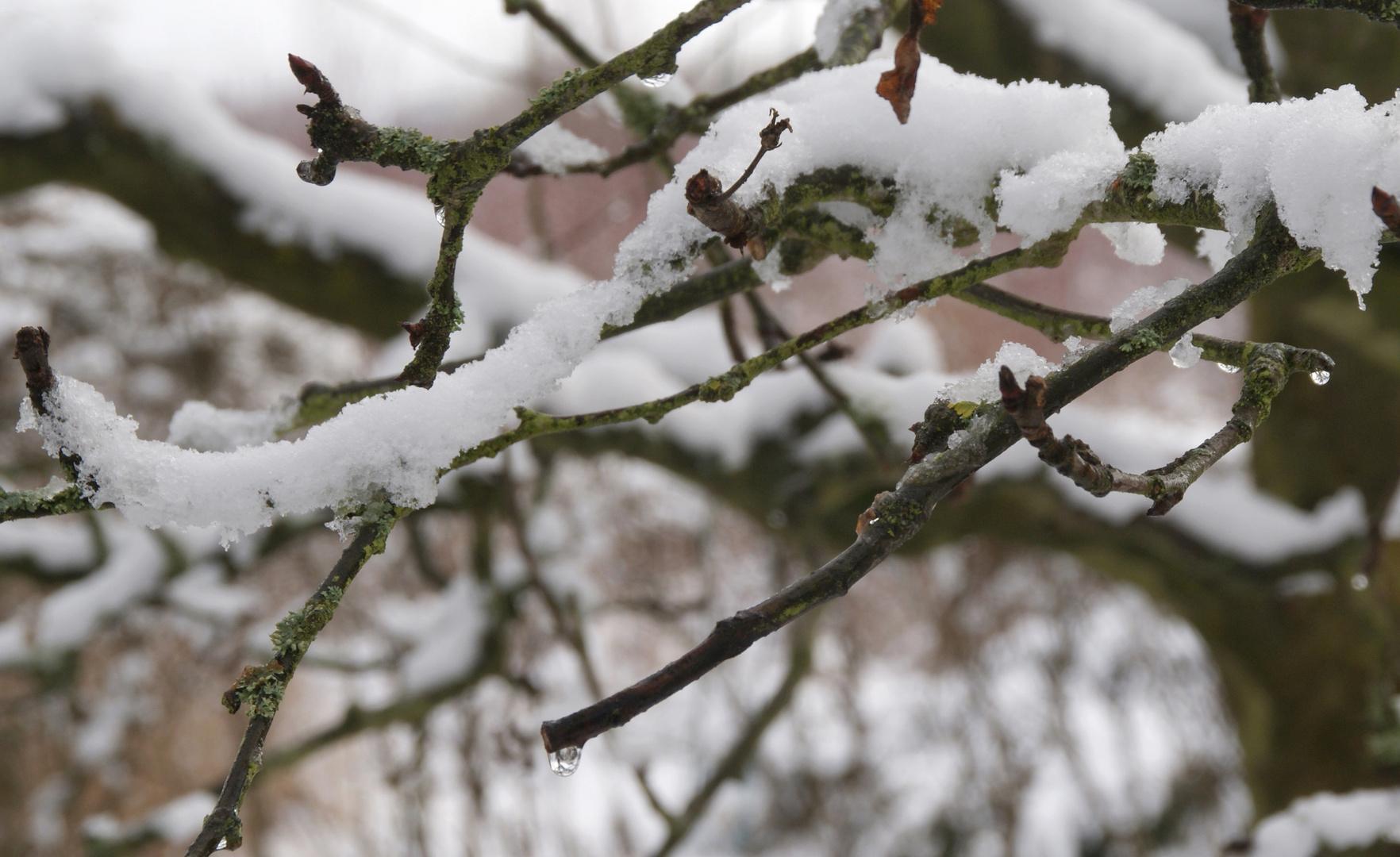 Tauender Schnee ...