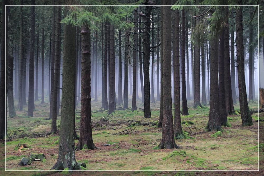 Taunuswald am Altkönig