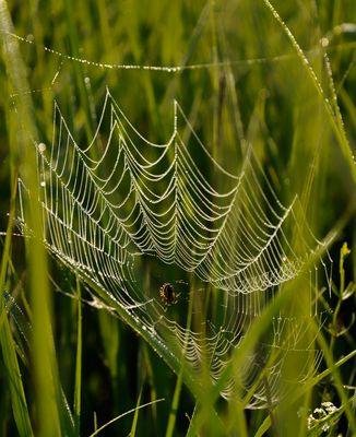 Tauspinnennetz