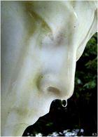 Tautropfen an der Nase
