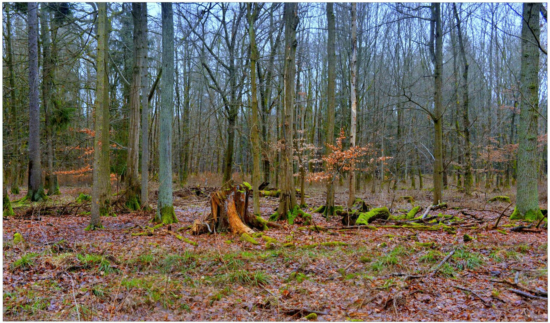 Tauwetter im Wald I (deshielo en el bosque I)