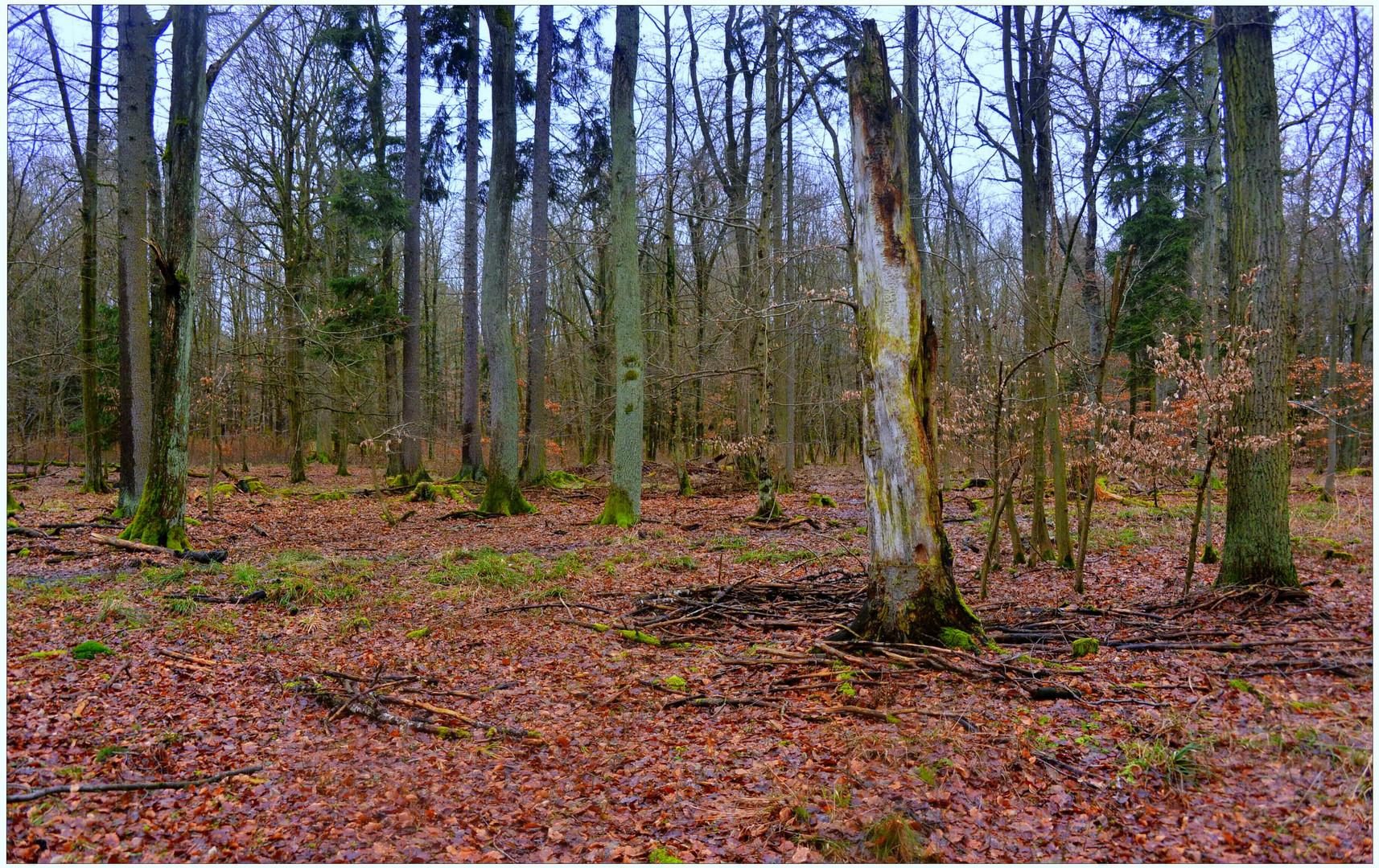 Tauwetter im Wald II (deshielo en el bosque II)