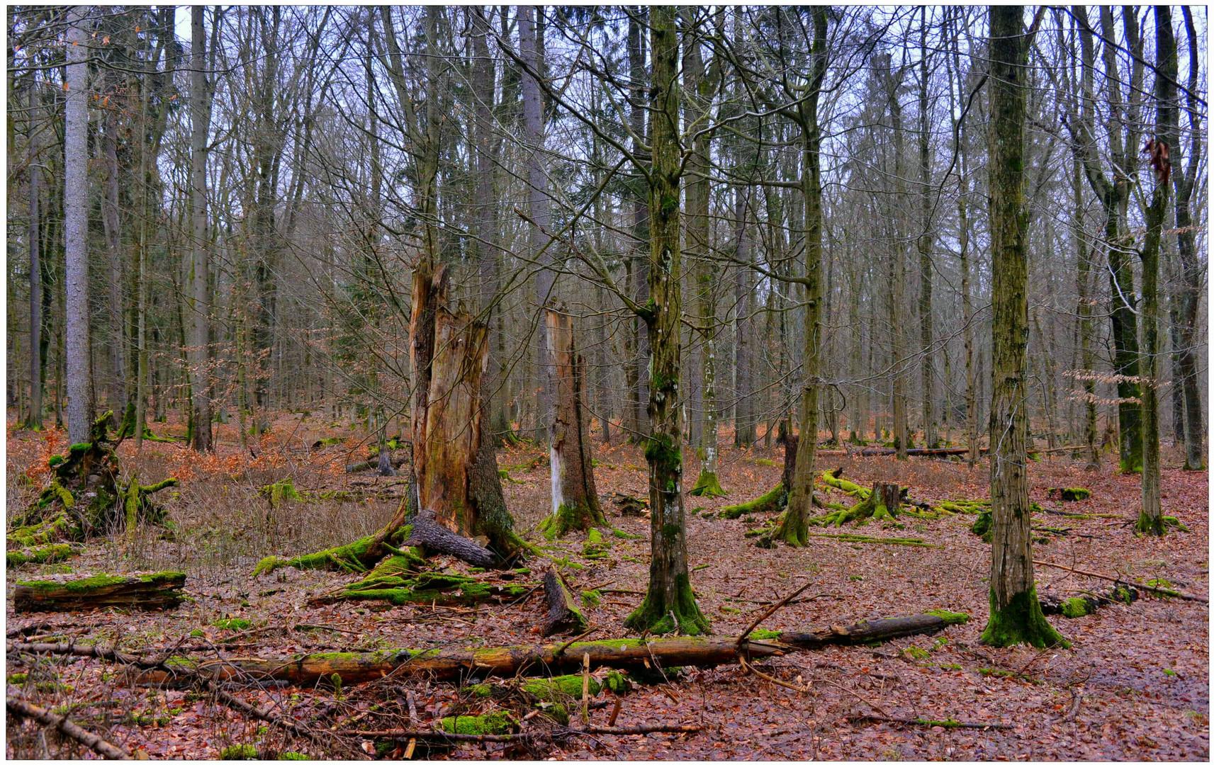 Tauwetter im Wald III (deshielo en el bosque III)