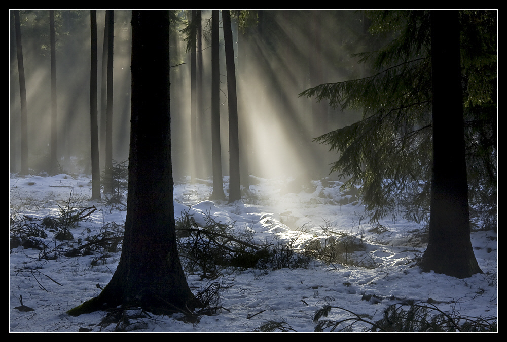 Tauwetter, Nebelwald - Thaw in the forest, foggy mood