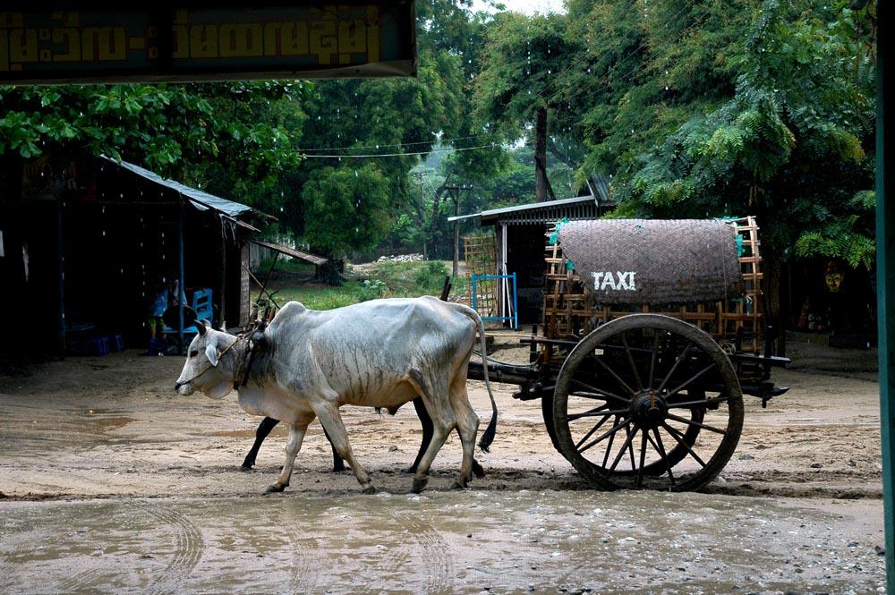 Taxi birman!
