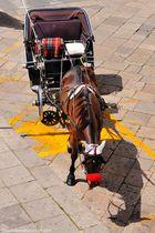 Taxi Palermitain (11.04.2009)