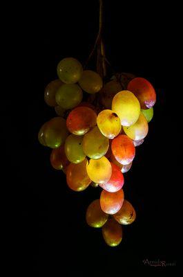 Te beso y todas las uvas sueltan el vino oculto de su corazón sobre mi boca