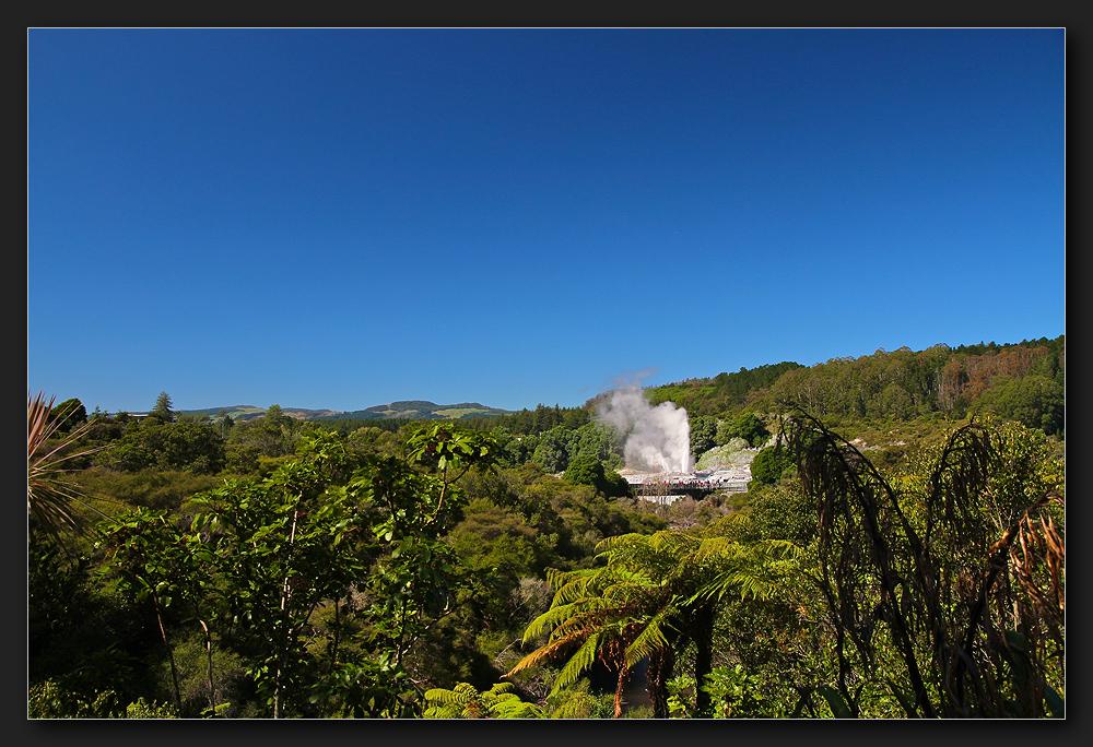 Te Puia - Pohutu Geysir