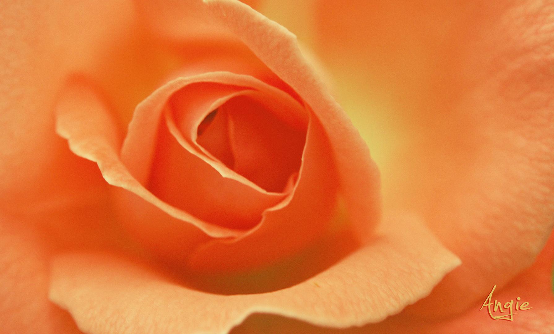 ''Te regalo una rosa'' A tí que te llamas Ana