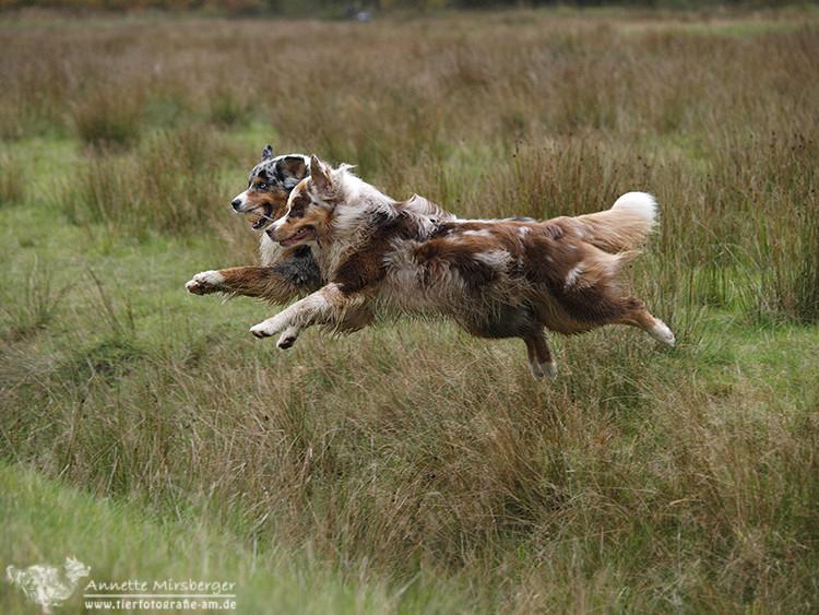 Team-Hopping mit Ball