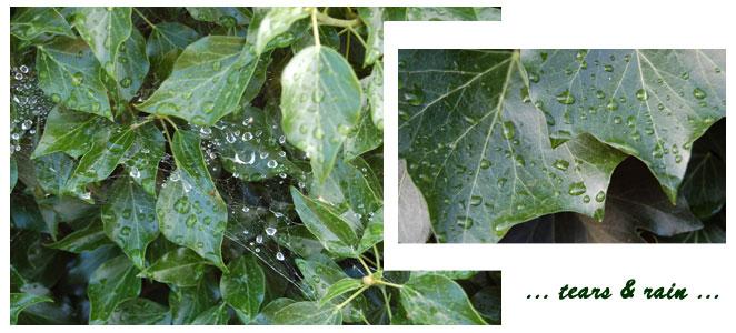 ... tears and rain ...